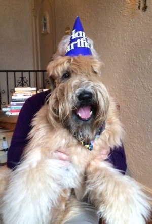 Tater 2 year birthday2