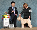 2/25/2018 - Mt Cheam Canine Assoc (Chilliwack BC) - Andy Gong